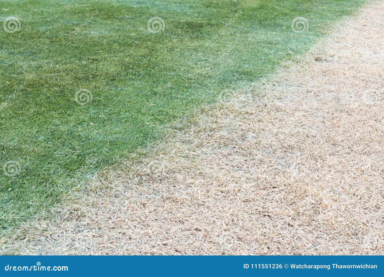 Color diffent del césped de la hierba efectuado de sombra de la sombra del sol