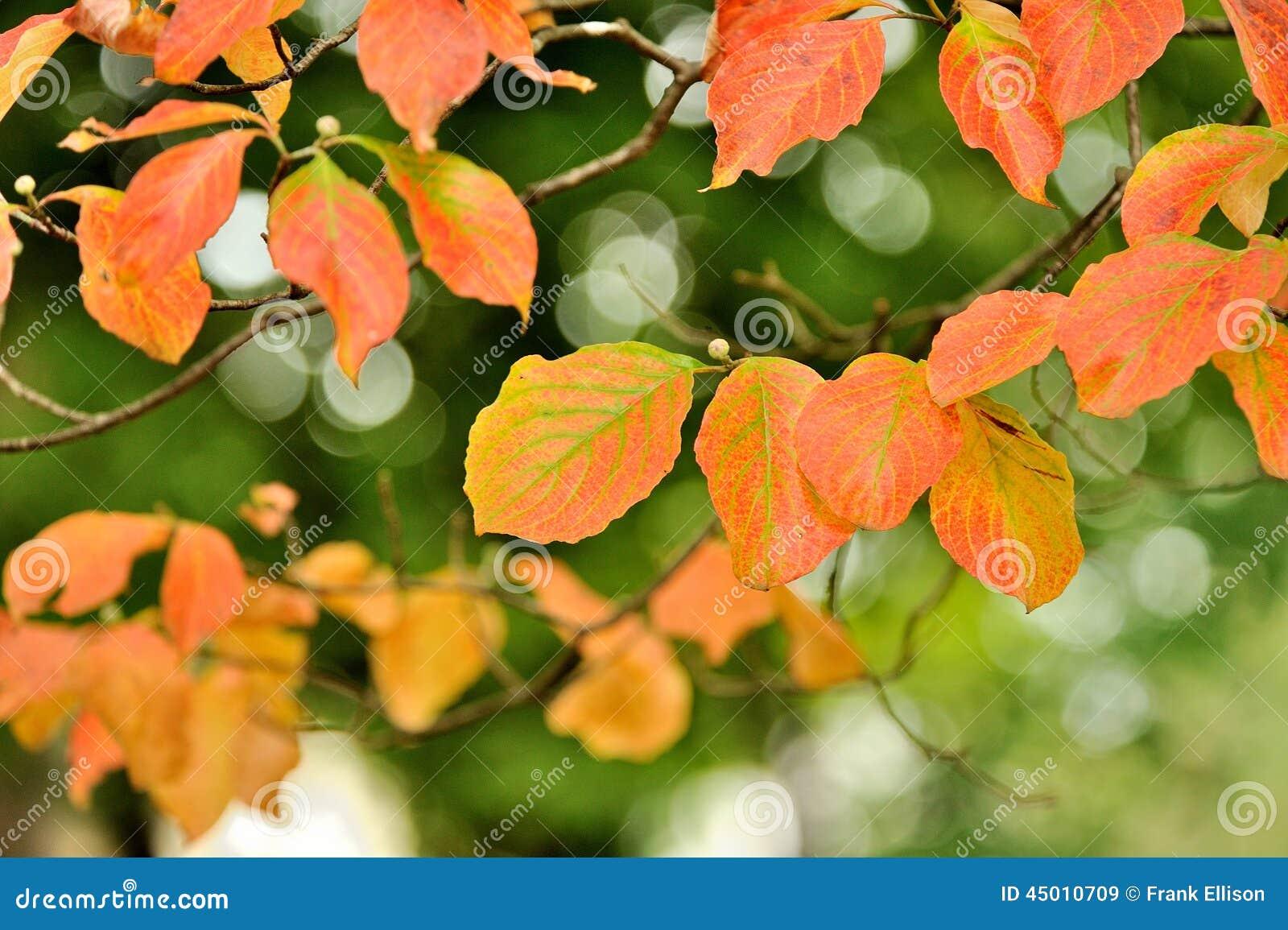 The Color of Fall stock illustration. Illustration of seasonal ...