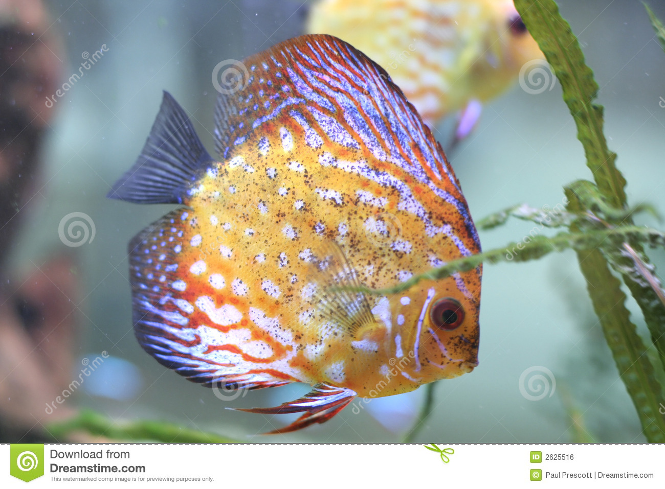 Color fish in aquarium stock photo image of fish for Image of fish