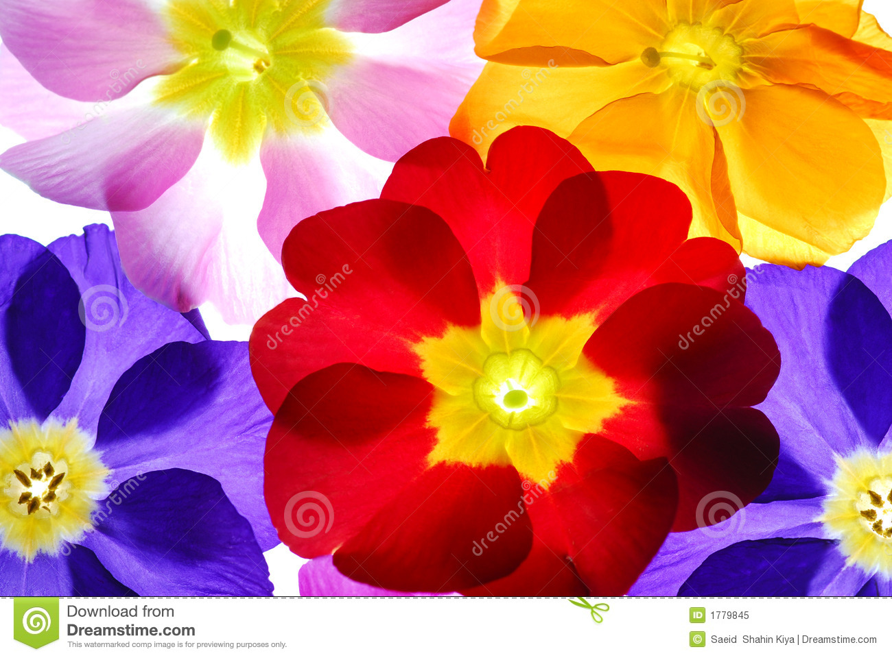 Color flowers stock image. Image of flower, springtime - 1779845