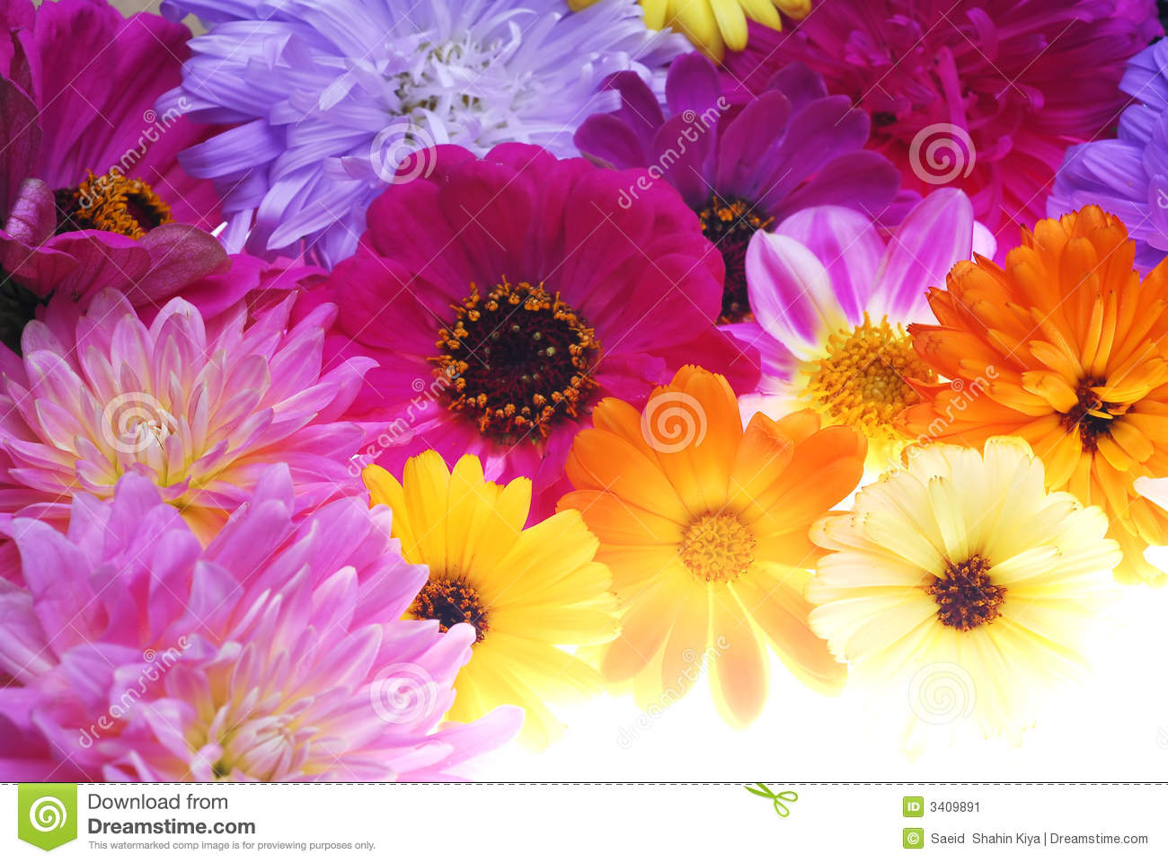 Different colors of flowers in full bloom HD picture - Flowers ...