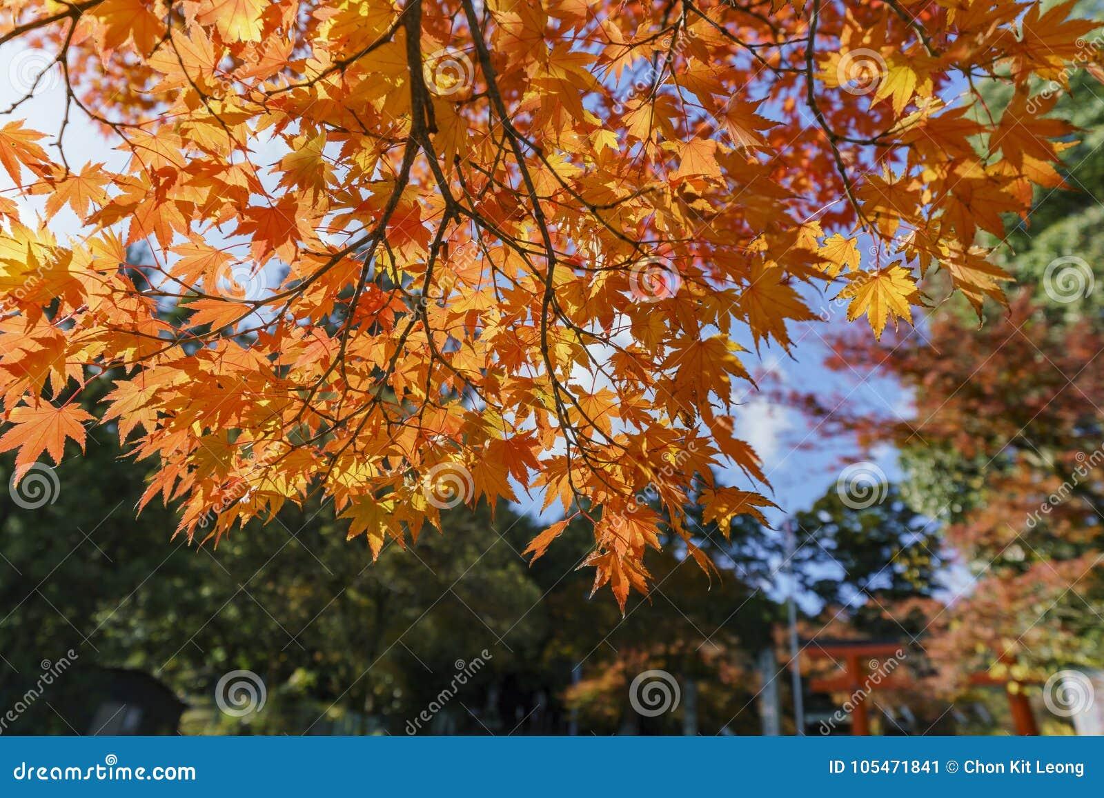Color hermoso de la caída cerca de Hiyoshi Taisha