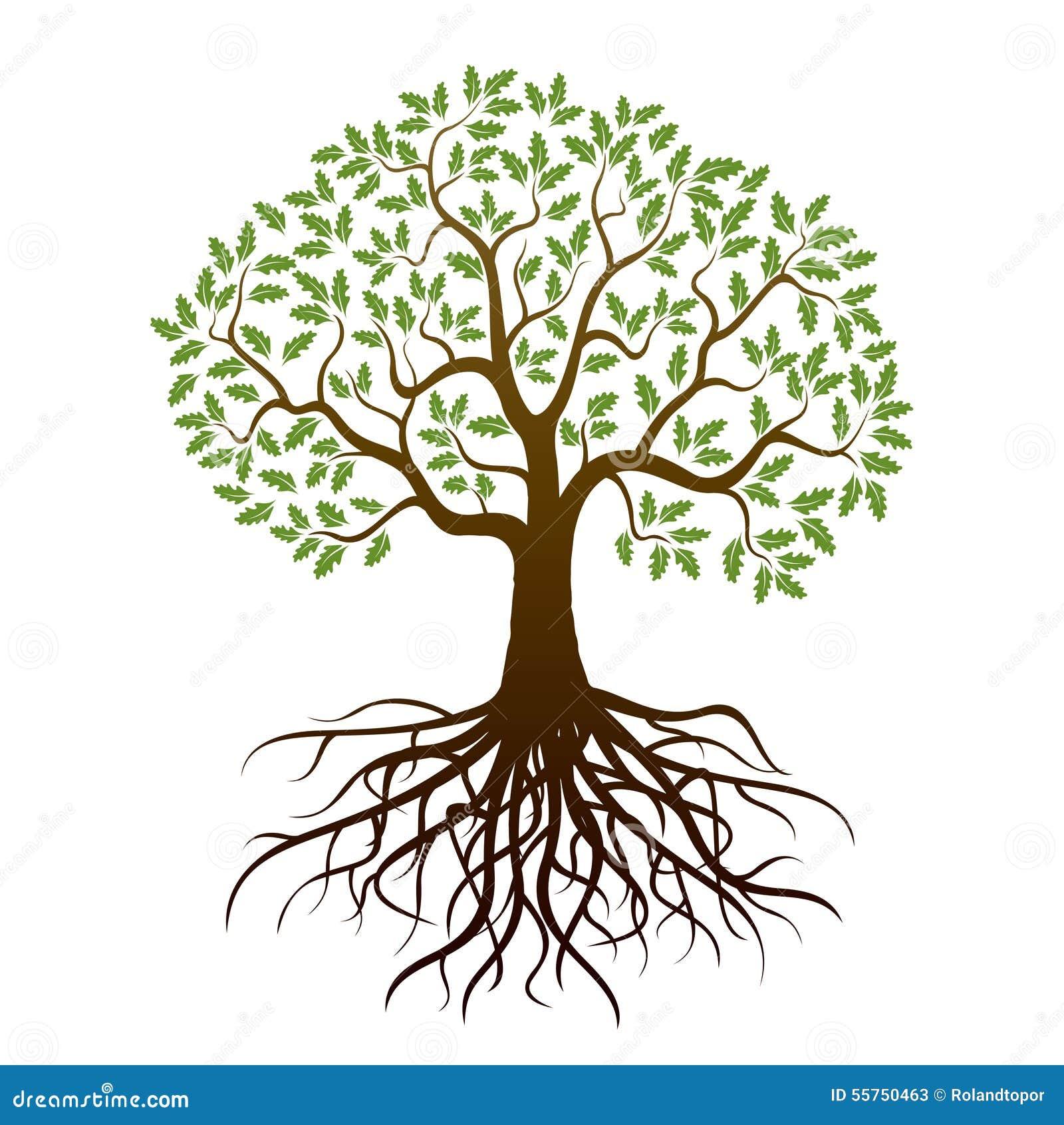 Color Oak Tree Stock Illustration