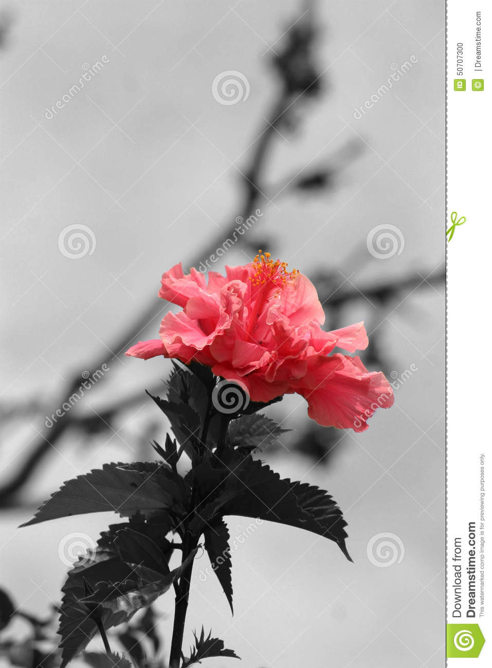 Color pop stock photo image of color flower white 50707300
