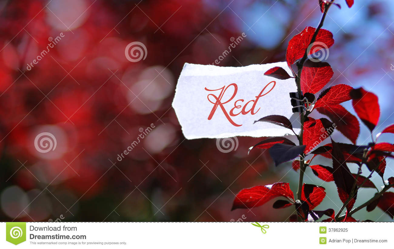 Color red in nature royalty free stock photo image 37862925 - Dreaming about the color red ...