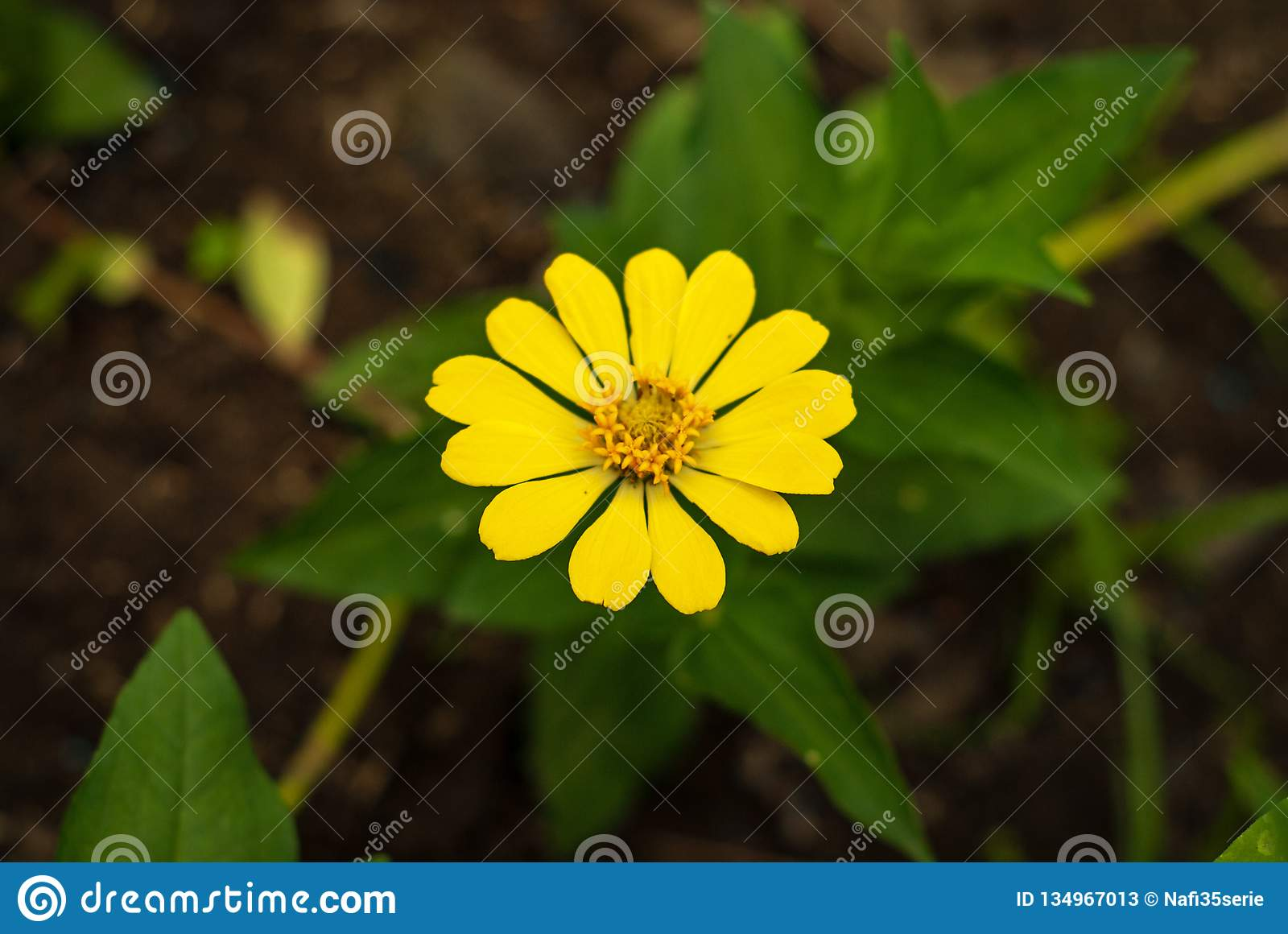 beautiful bright yellow flowers and green leaves with blurry background