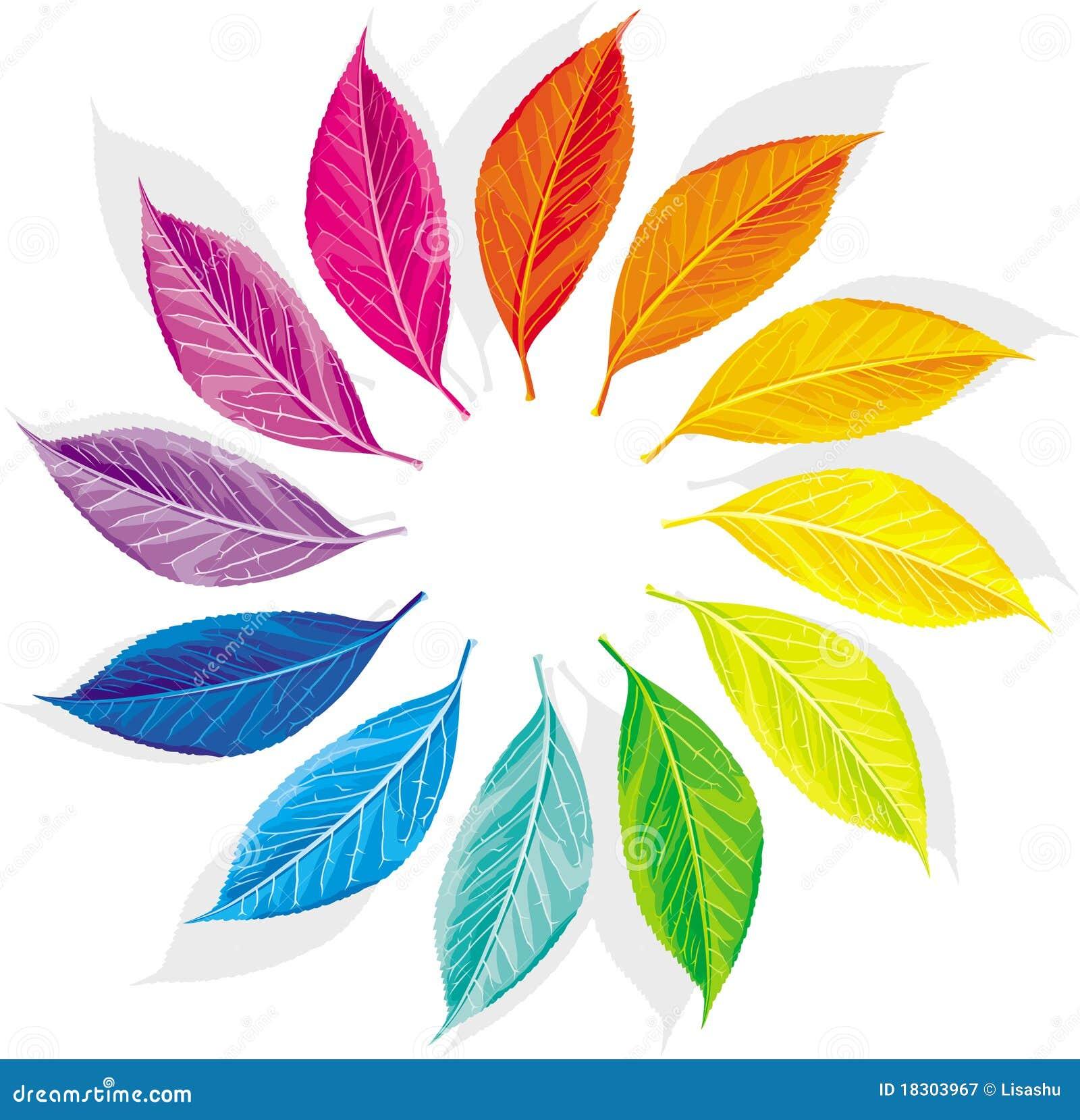 flower colour wheel template pdf