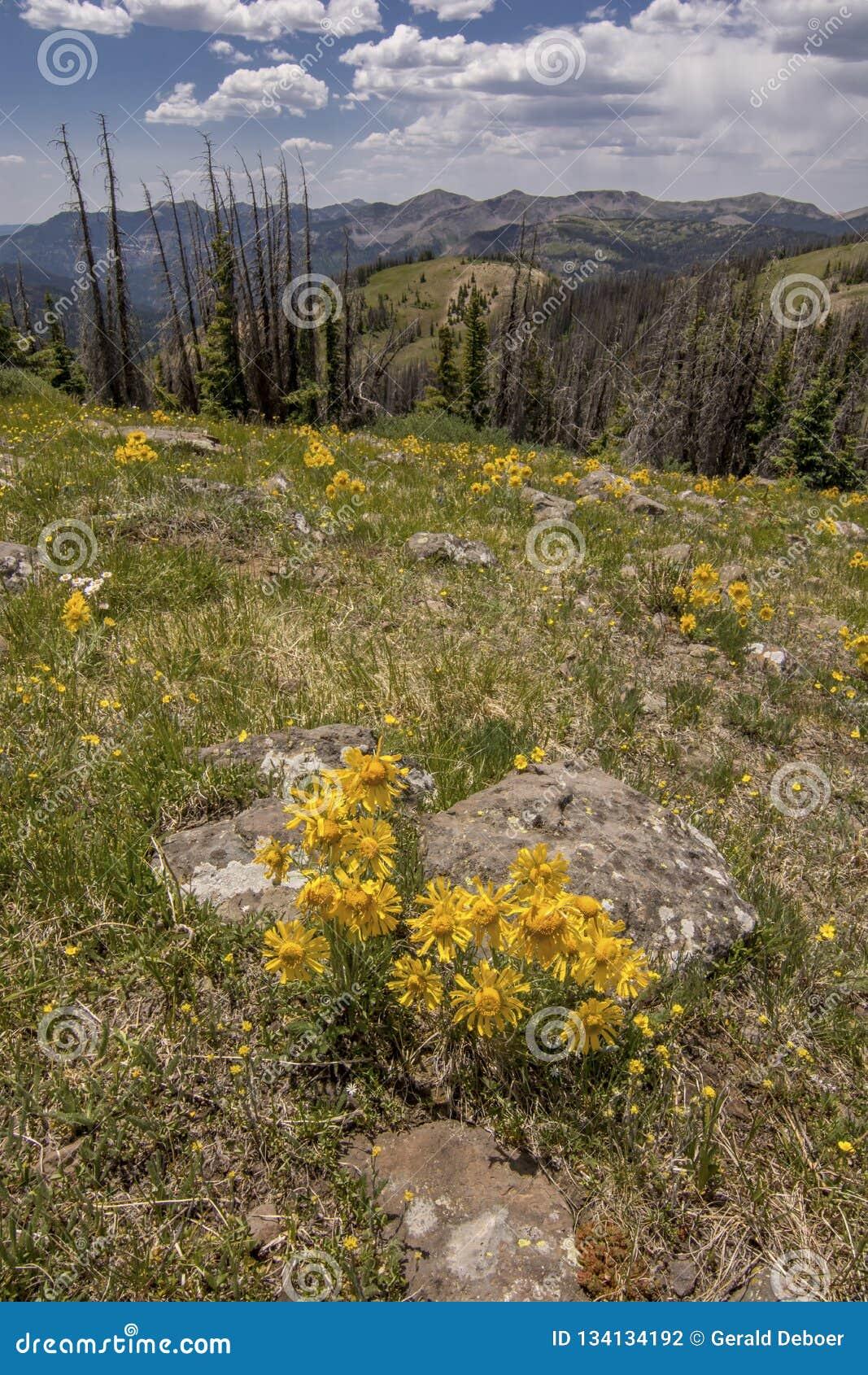 Colorado Mountain Top