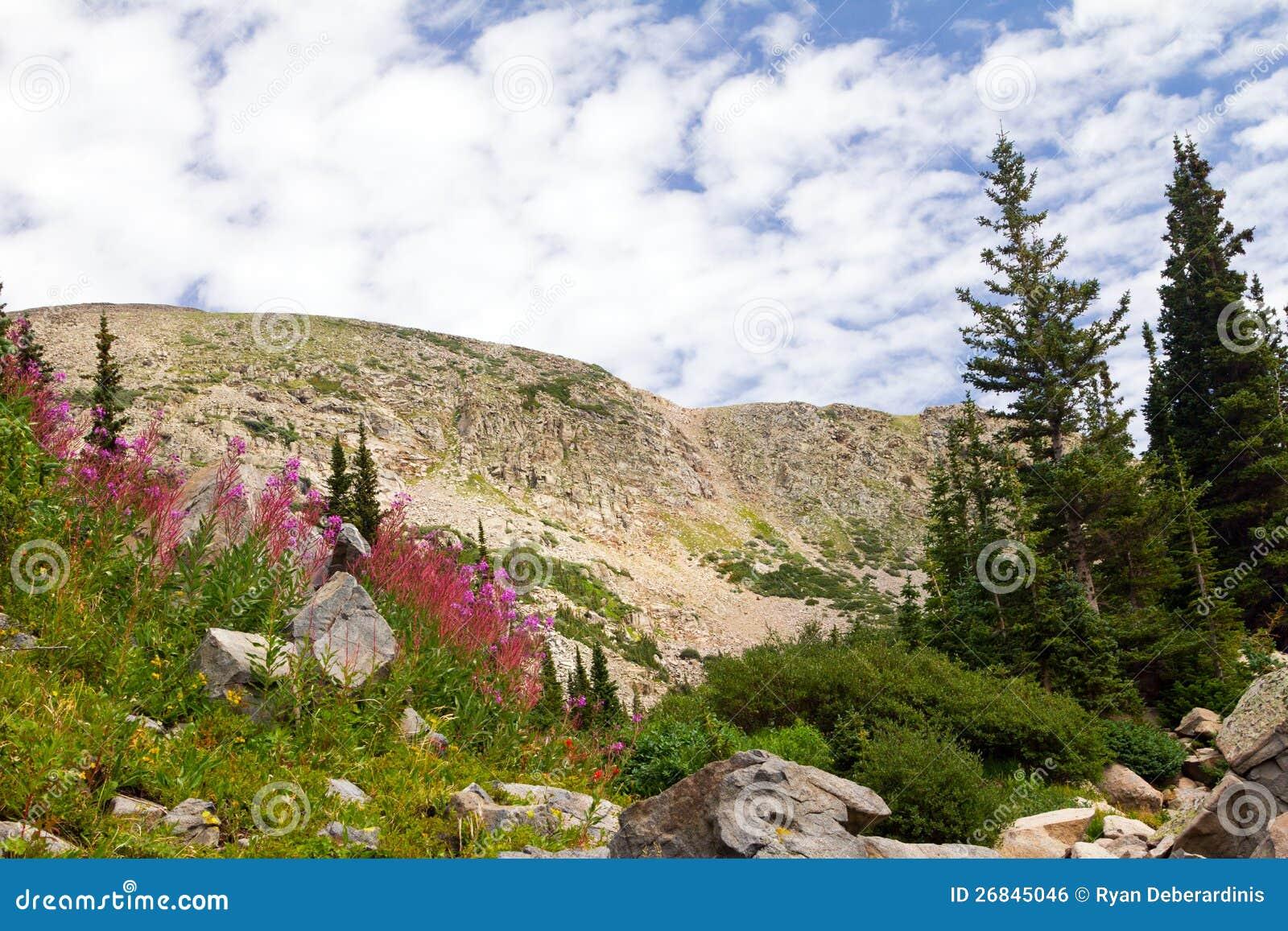 Colorado Summer Flowers Mountain Landscape Royalty Free ...