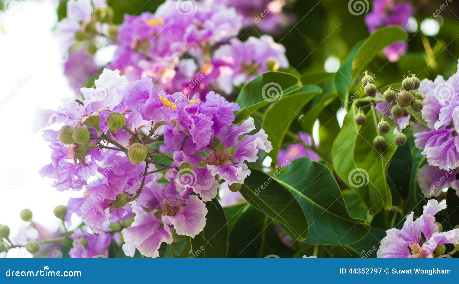 Colore del fiore