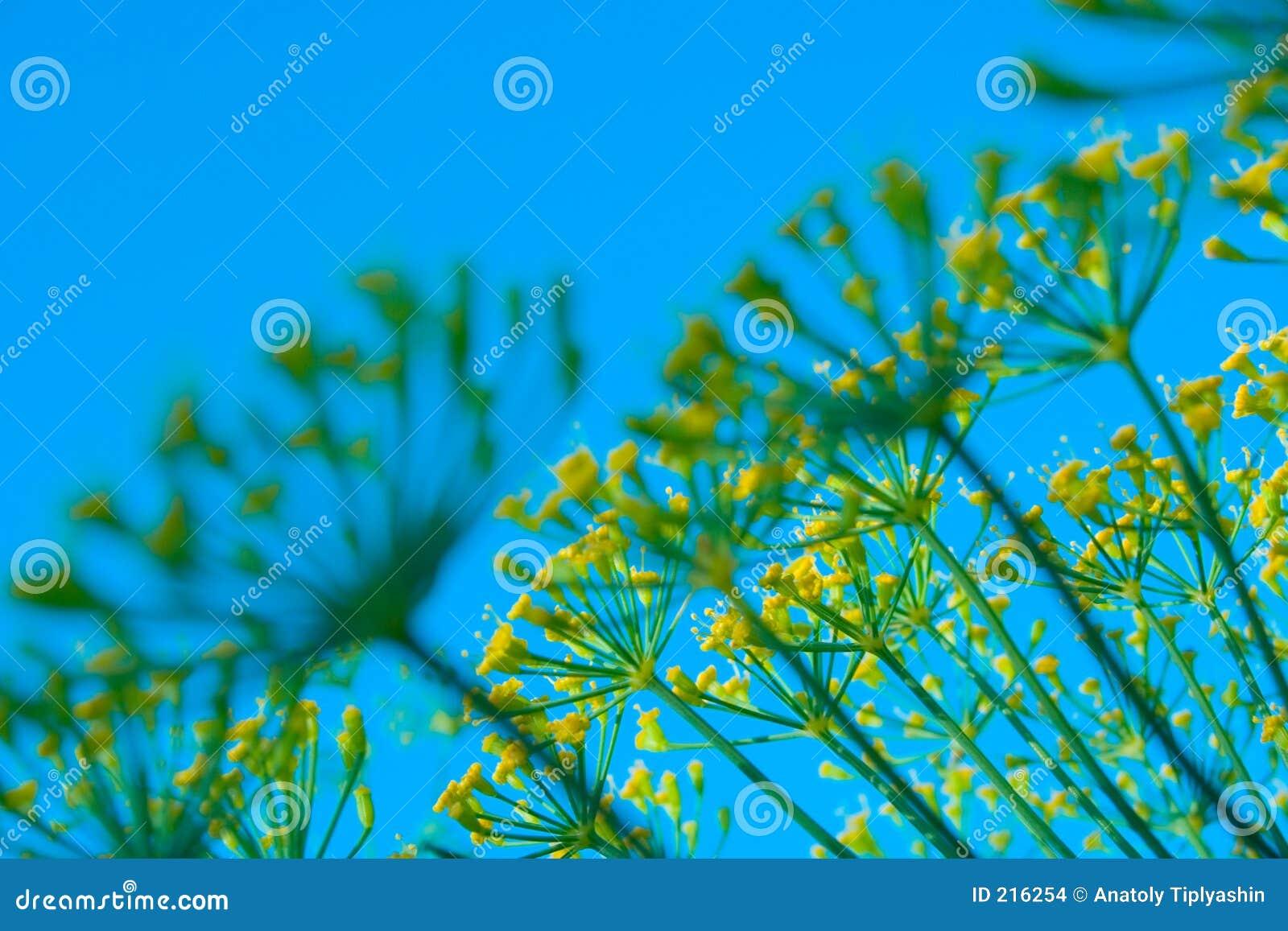Colore giallo dei fiori
