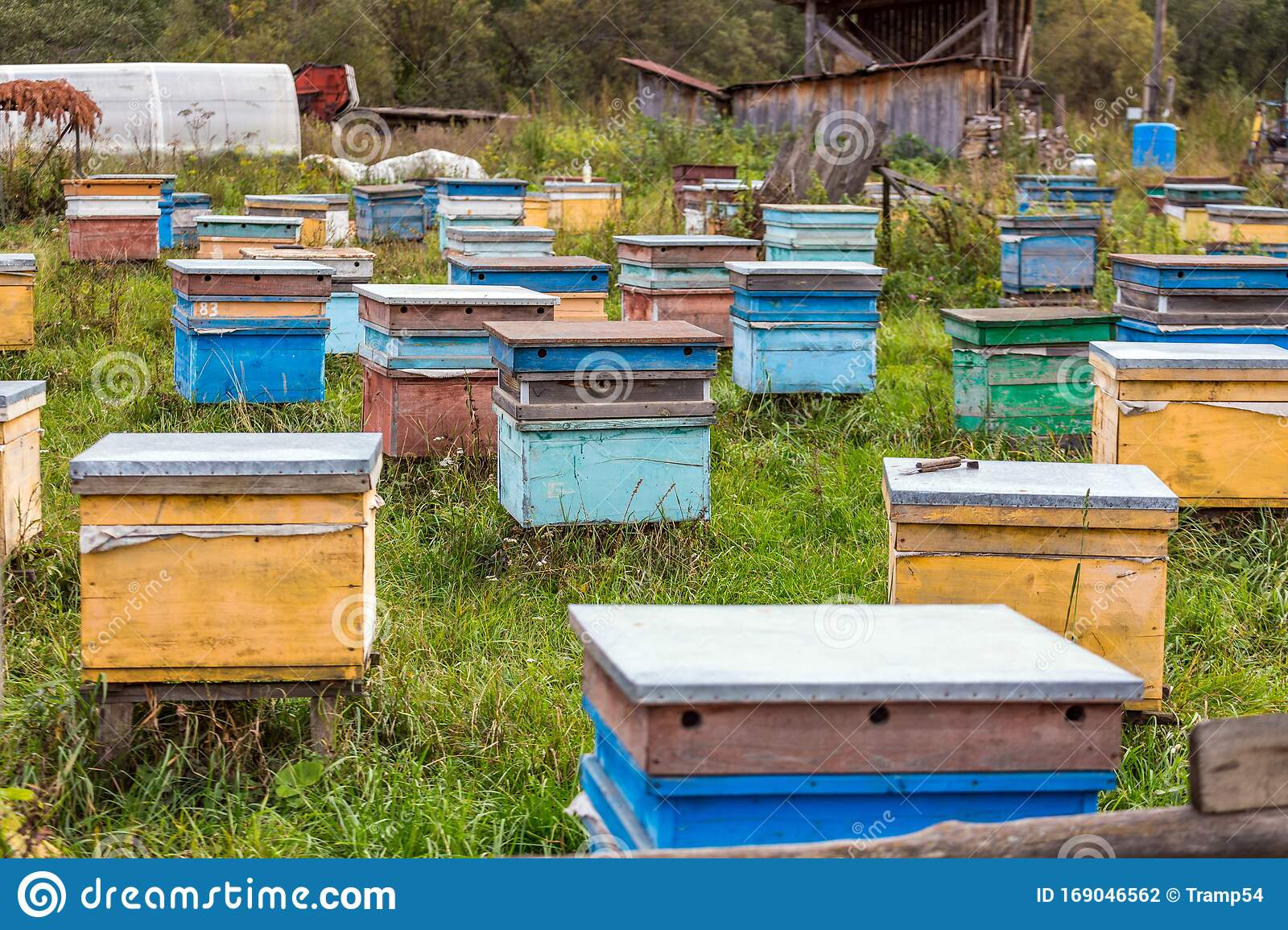 Apiary In The Woods. Hives. Bees Stock Image - Image of