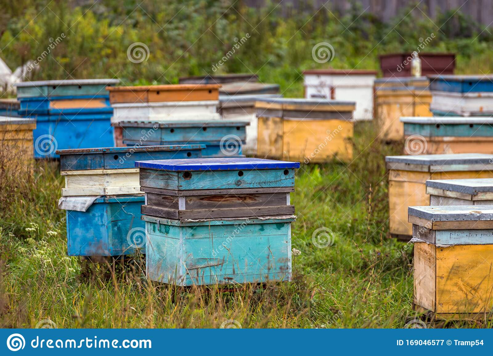 Small Apiary With Colorful Hives In A Yard Of Traditional