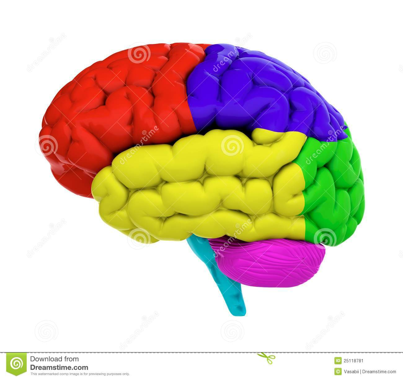Colored Brain Stock Image - Image: 25118781