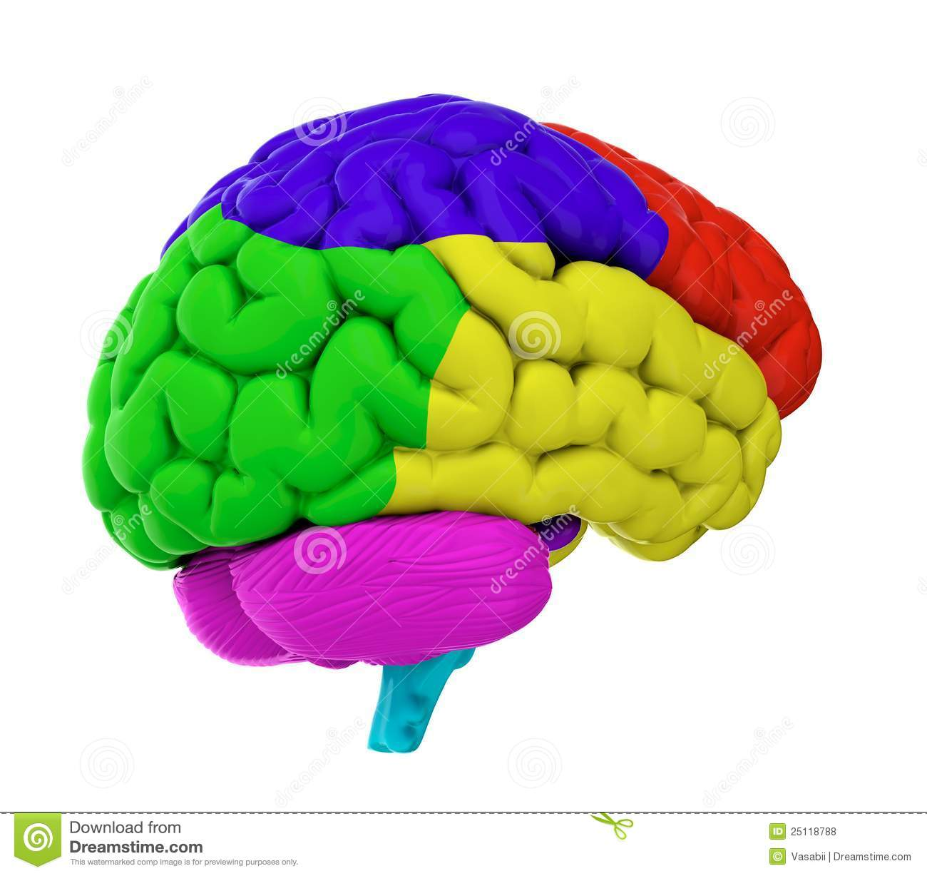 Colored Brain Royalty Free Stock Photos Image 25118788