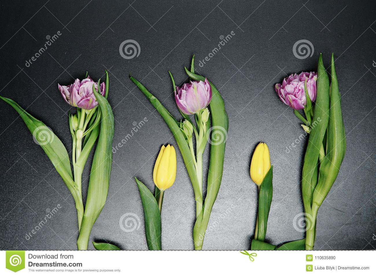 8ae64874936f4 Set the red pink purple tulip. Flowers on a black background with clipping  path. Closeup of the shadows. The bud of a tulip is a green stalk. Nature