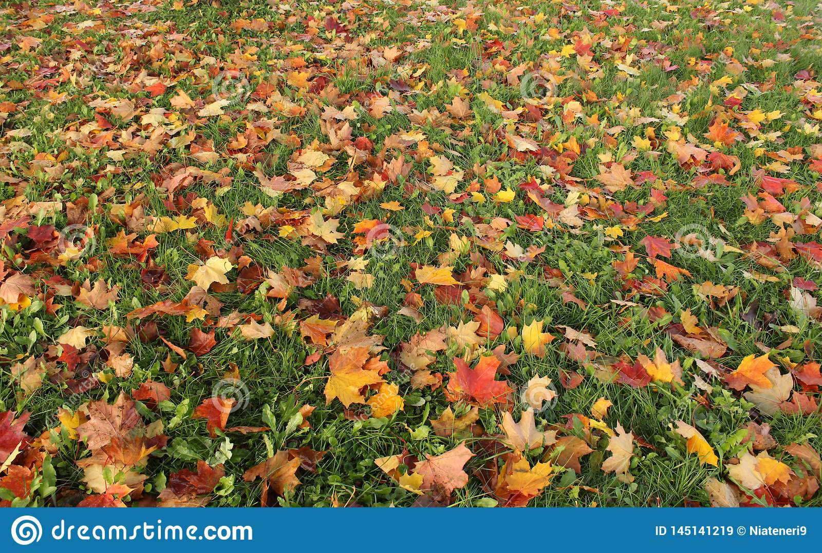 Colored leaves in the grass