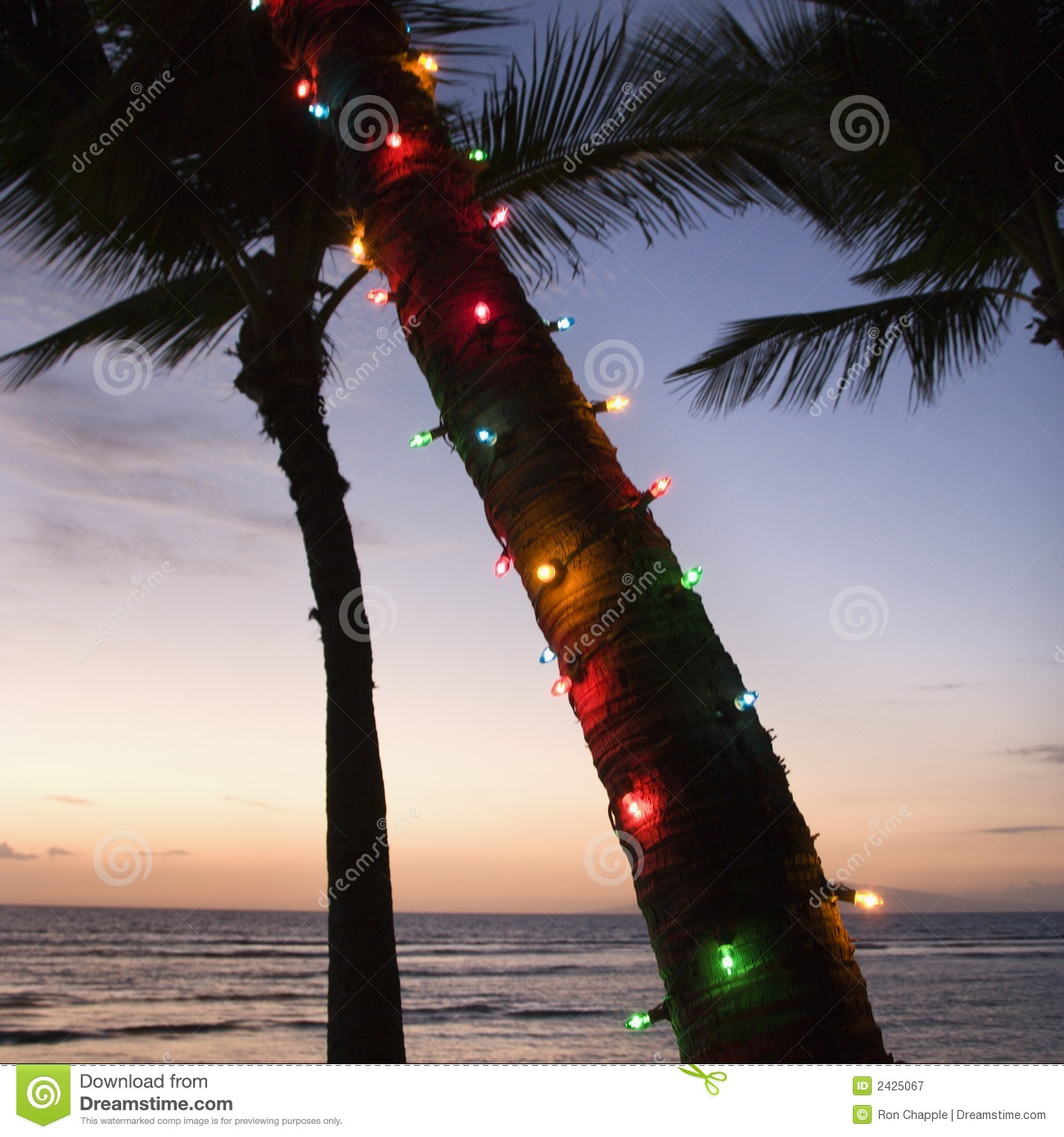 Christmas Lights In Palm Trees.Colored Lights On Palm Tree Stock Image Image Of Ocean