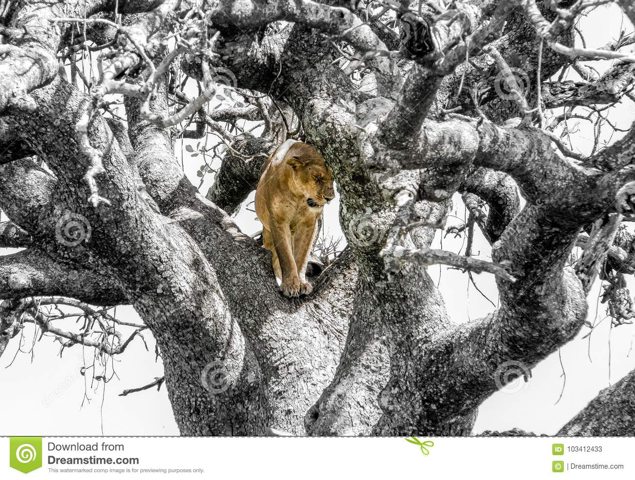 Colored Lion in a Black and White Tree