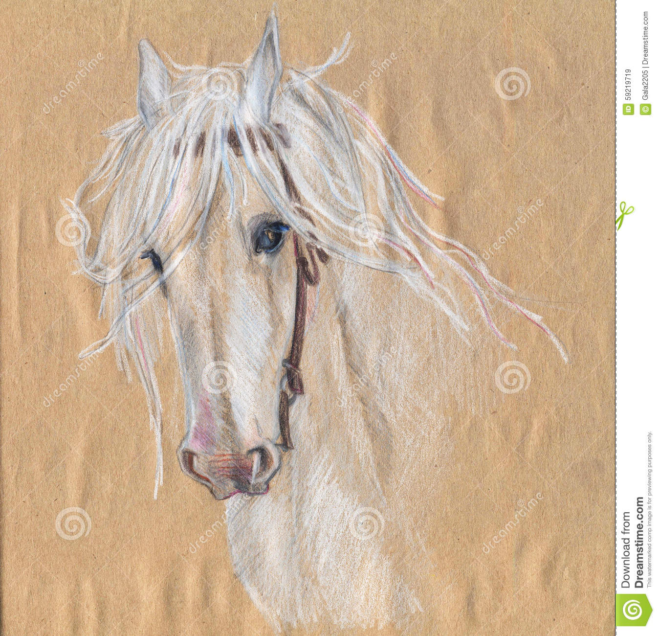 Colored pencil drawing of a white horse beautiful eyes stock illustration image 59219719 for Disegni di cavalli a matita