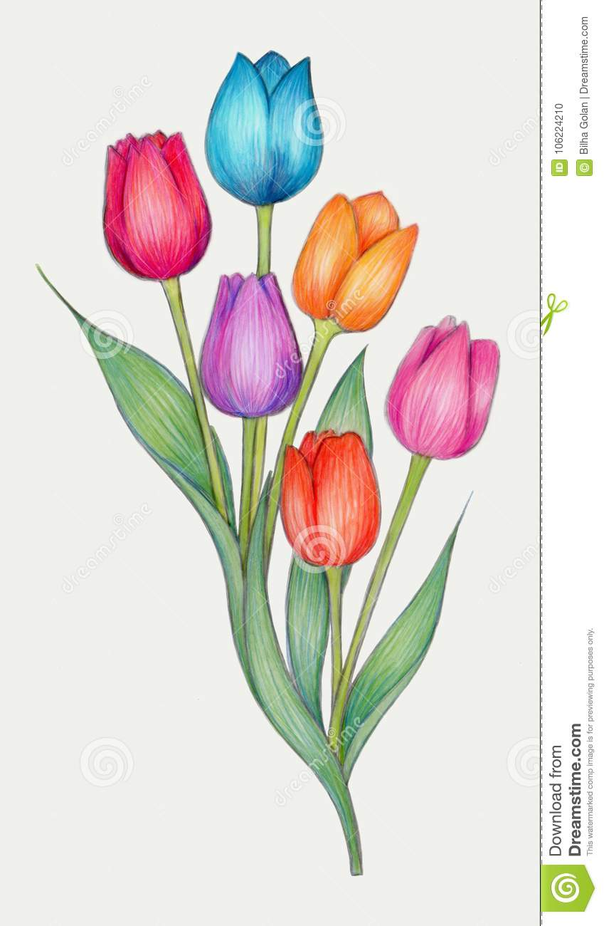 Colored pencils drawing of tulips stock illustration illustration