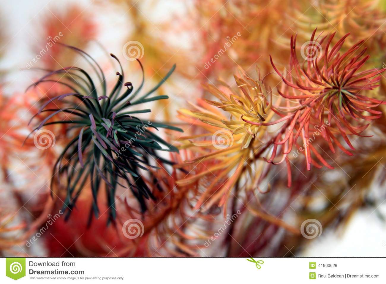Colored plants on white background 01