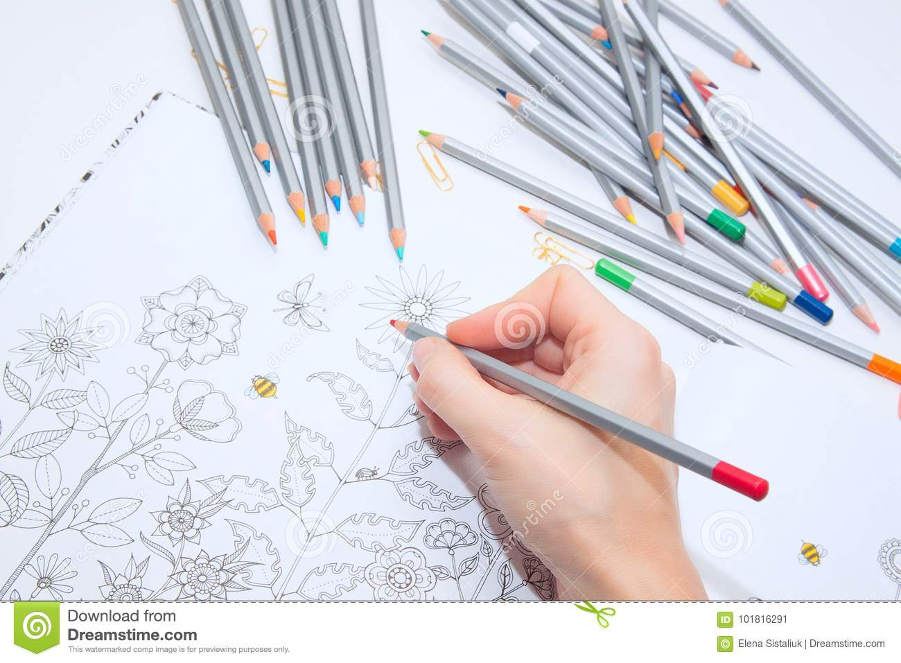 Colorer - antistress with colored pencils.Girl paints a coloring book for adults with crayons