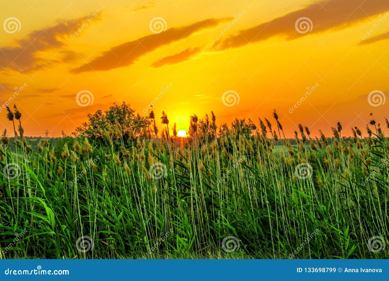 Colores calientes y calientes y sombras de paisajes hermosos de Rusia en la región de Rostov Campos locales de girasoles amarillo