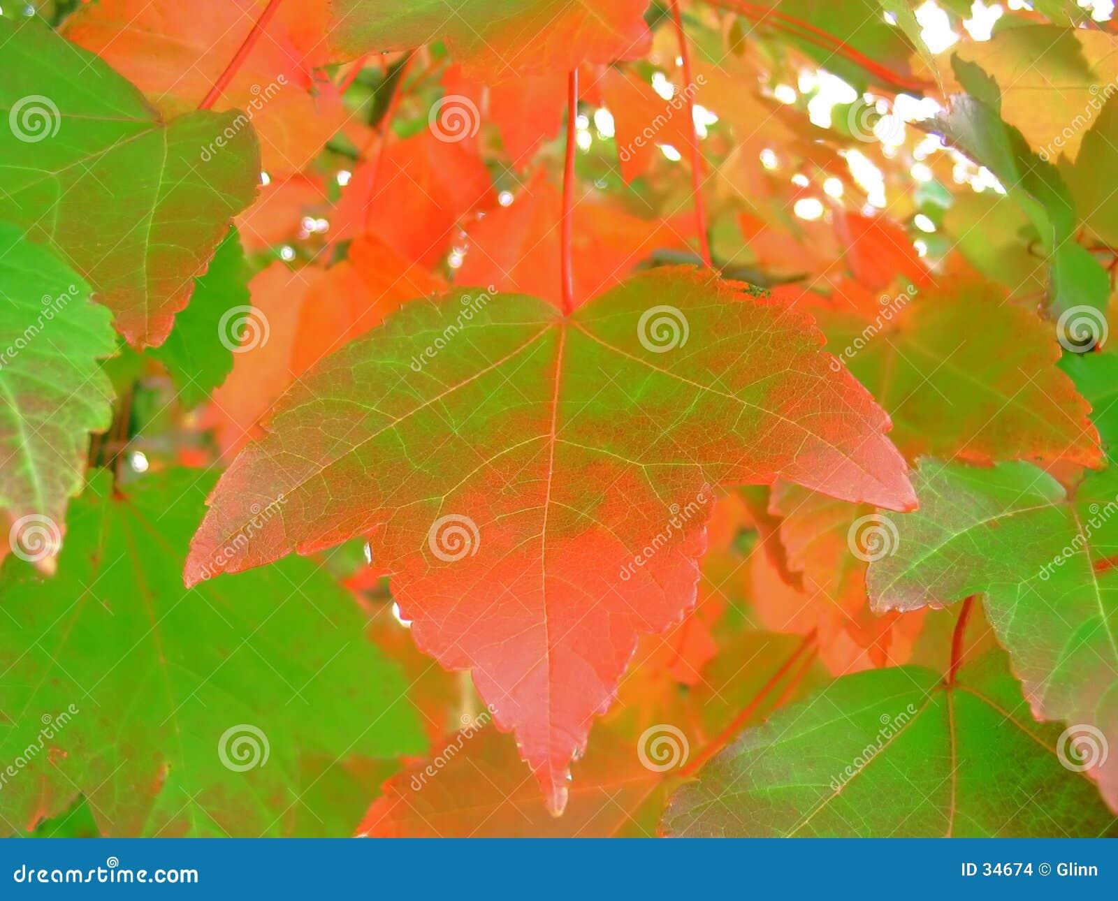 Download Colores de la caída foto de archivo. Imagen de otoño, verde - 34674