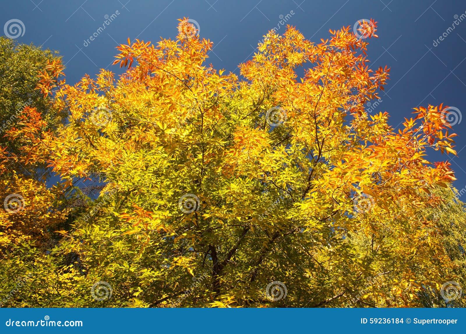 Download Colores de la caída foto de archivo. Imagen de colorante - 59236184
