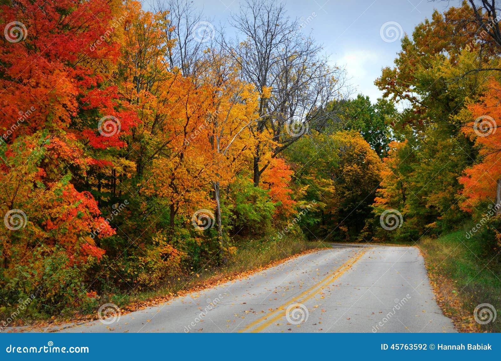 Colores de la caída, camino con las rayas amarillas