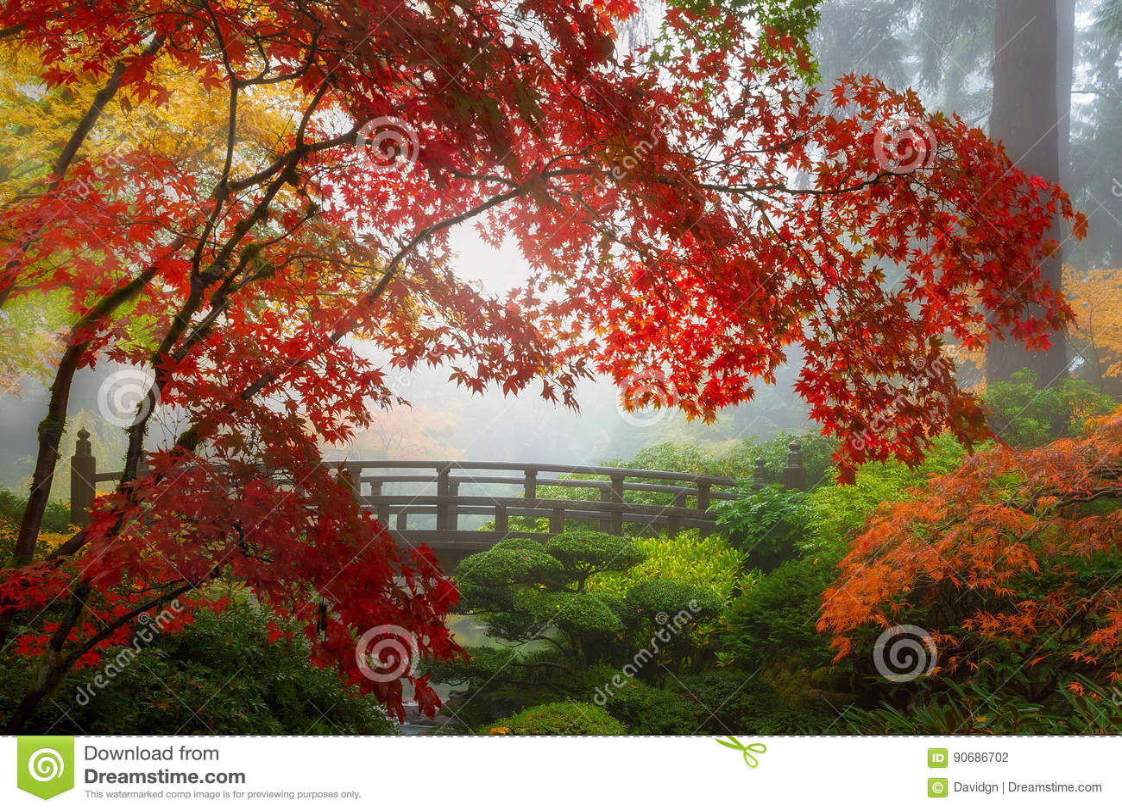 Colores de la caída por el puente de la luna en el jardín japonés de Portland en Oregon