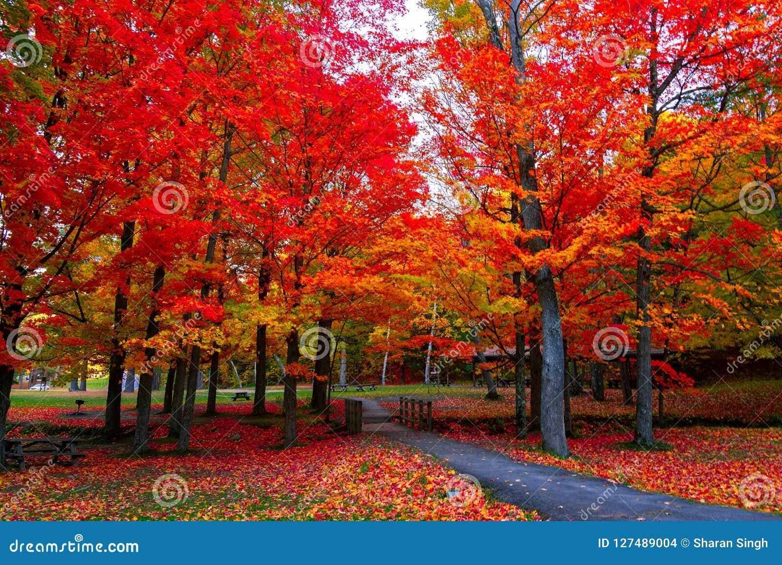 Colores hermosos del otoño del follaje de otoño en los E.E.U.U. de nordeste