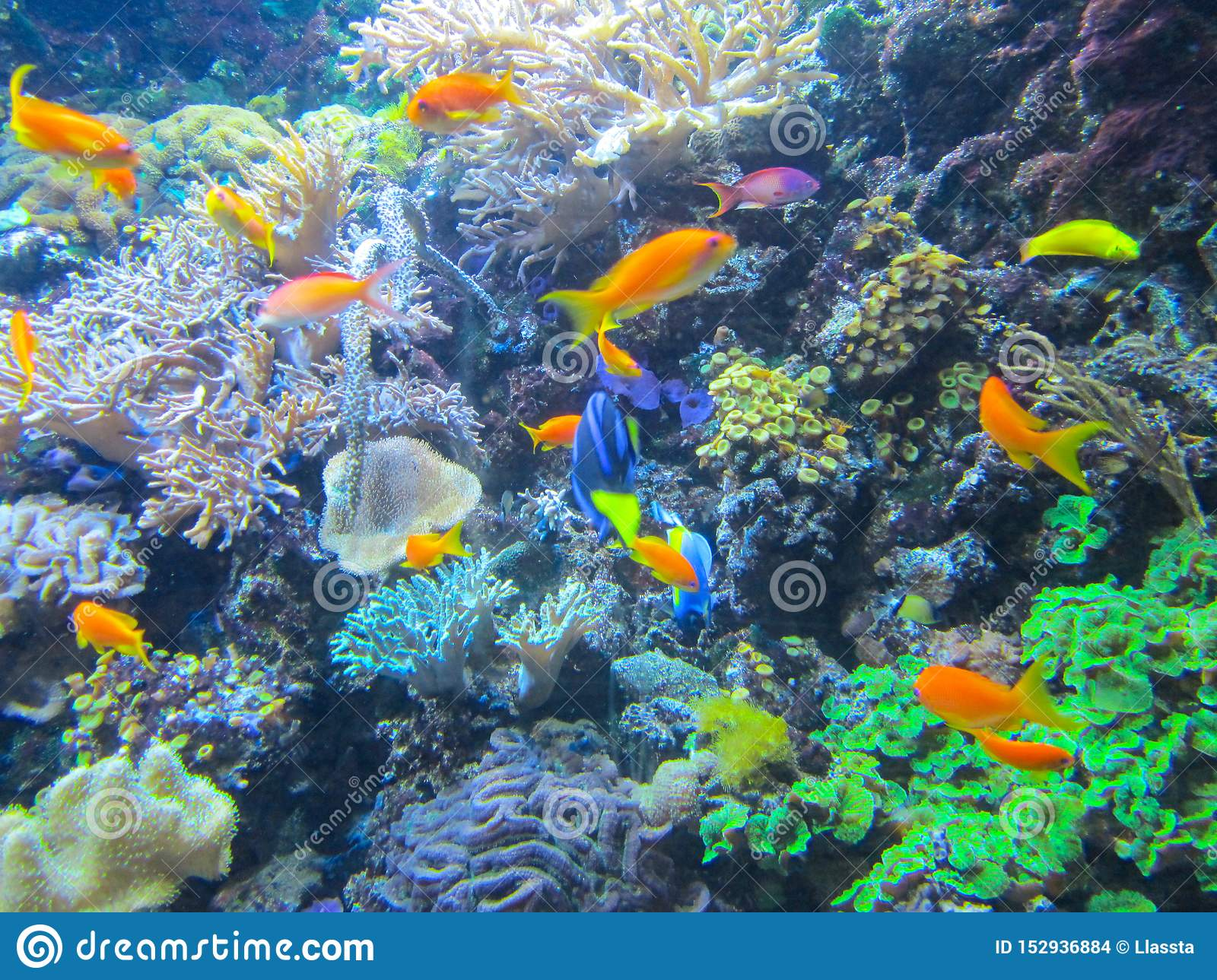 A colorful aquarium with beautiful fish, plants and corals