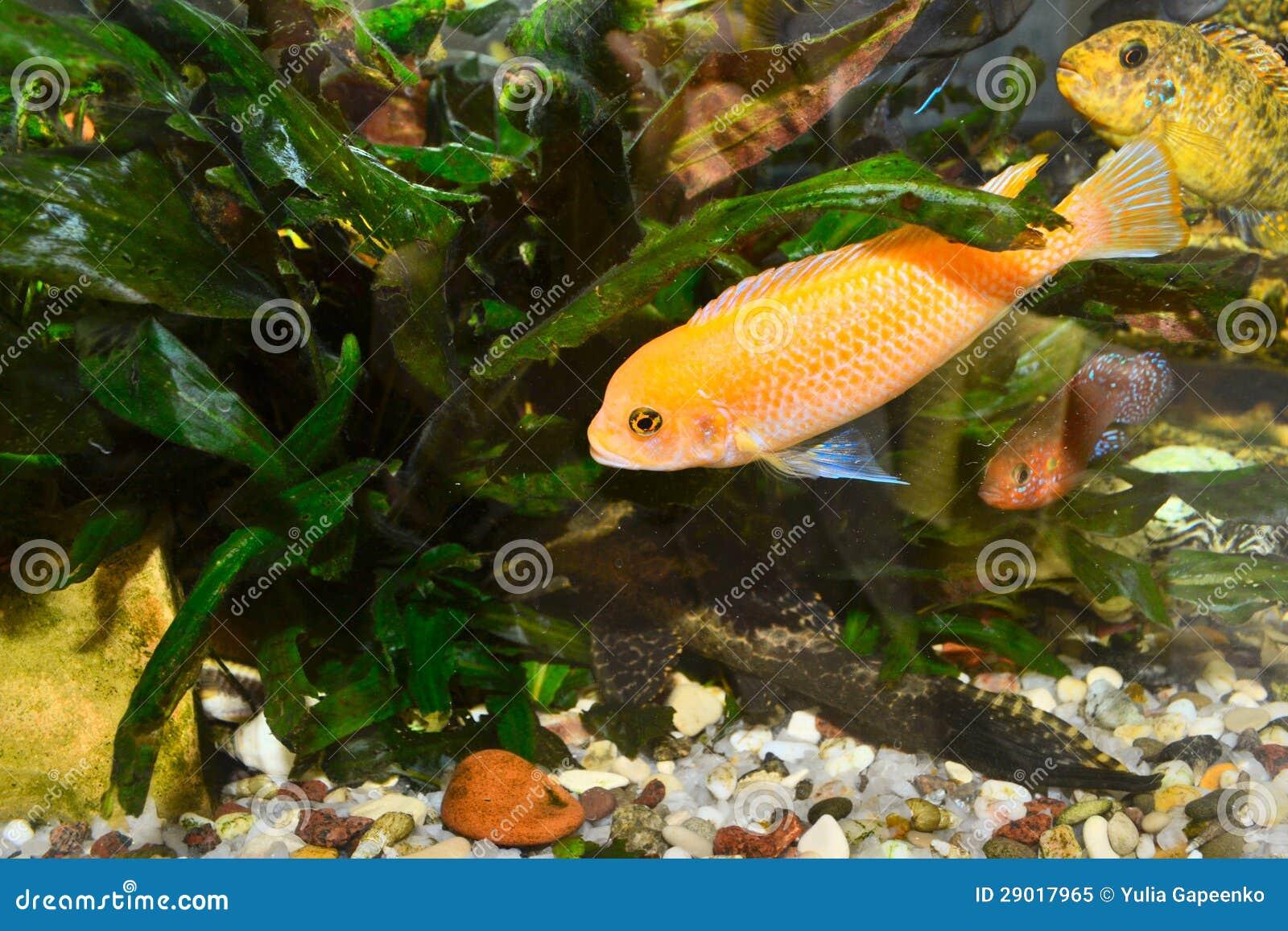 Colorful Aquarium With Fish Royalty Free Stock Photo