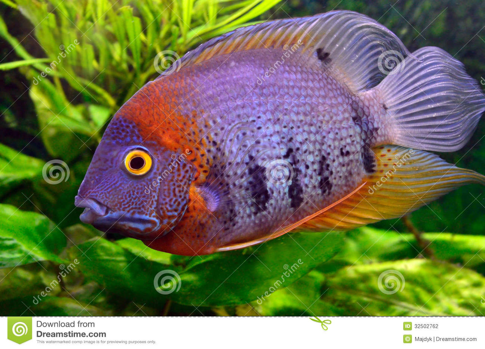 Image Result For Fish Aquatic Pets