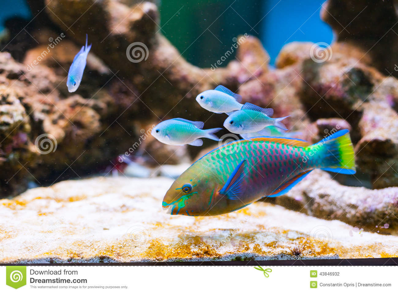Fishes in aquarium stock photo 92680932 for Dream of fish swimming
