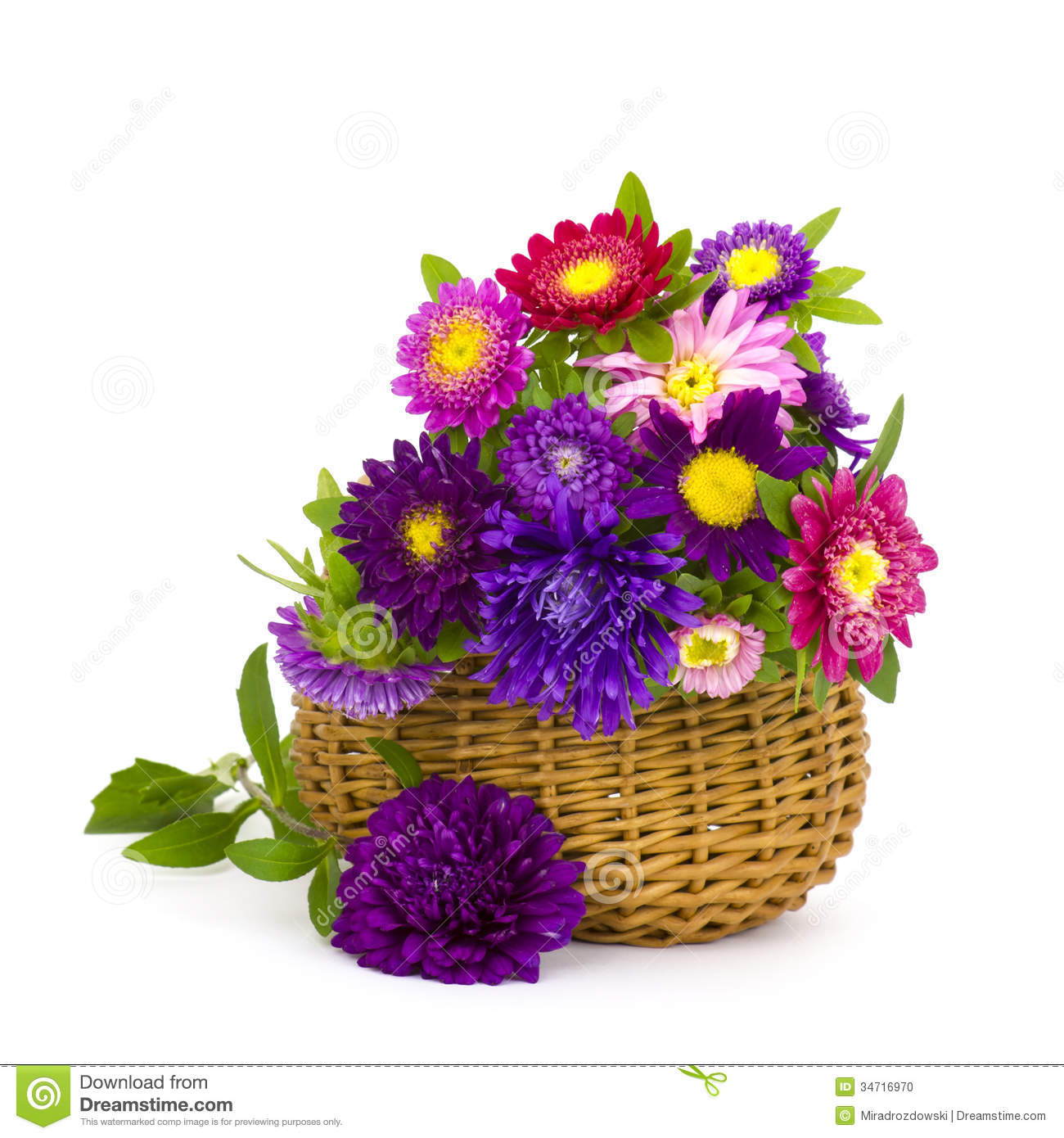 colorful asters flowers in a basket stock photo image of blossom
