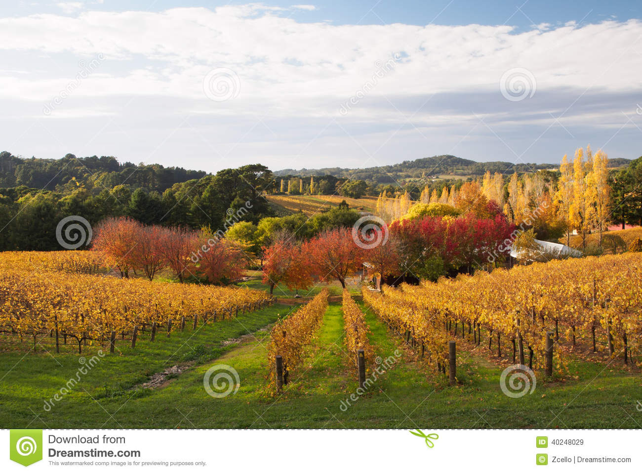 Colorful autumn in adelaide hills wine region stock photo for Landscape design adelaide hills