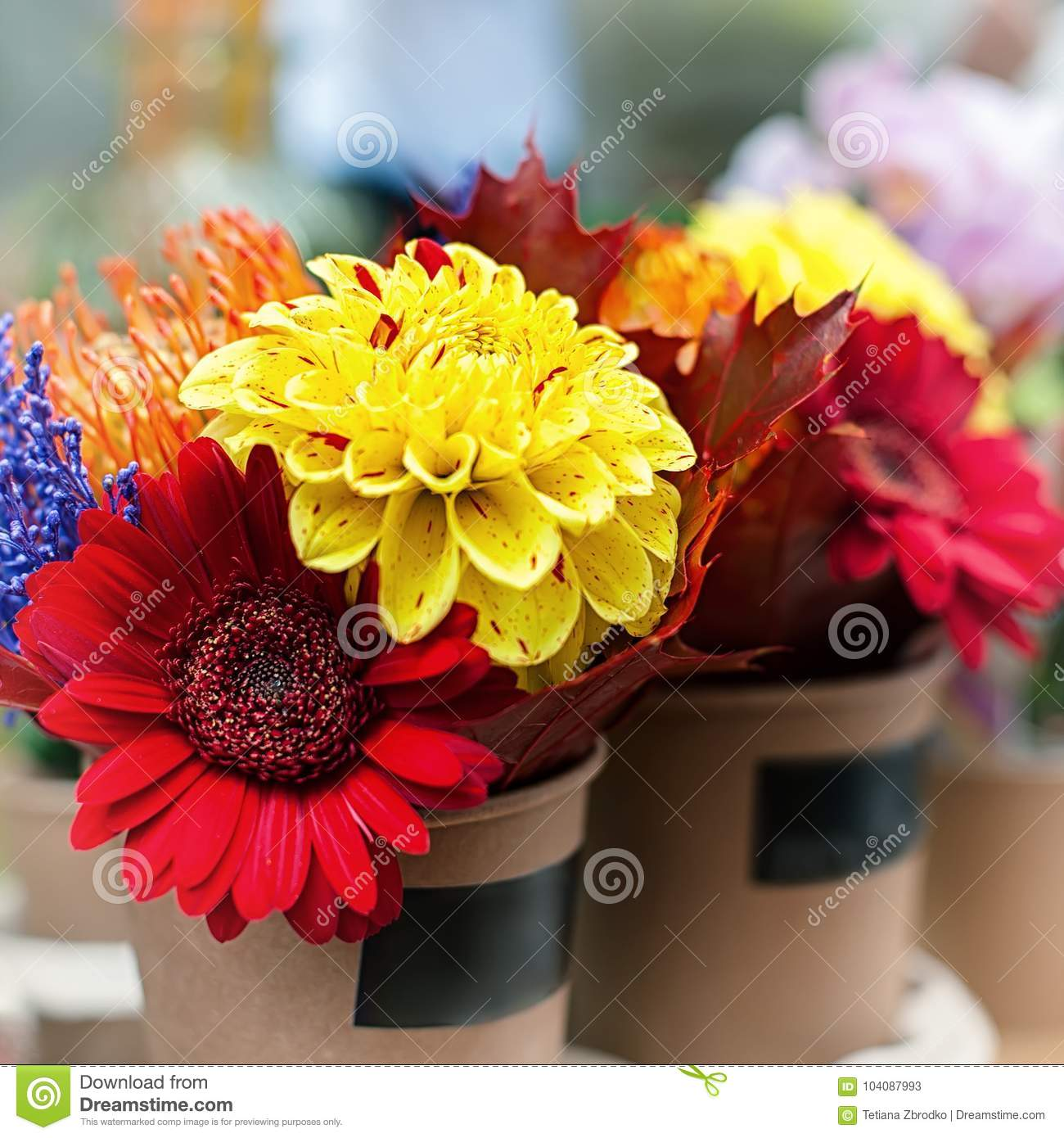 Colorful autumn flowers stock image. Image of design - 104087993