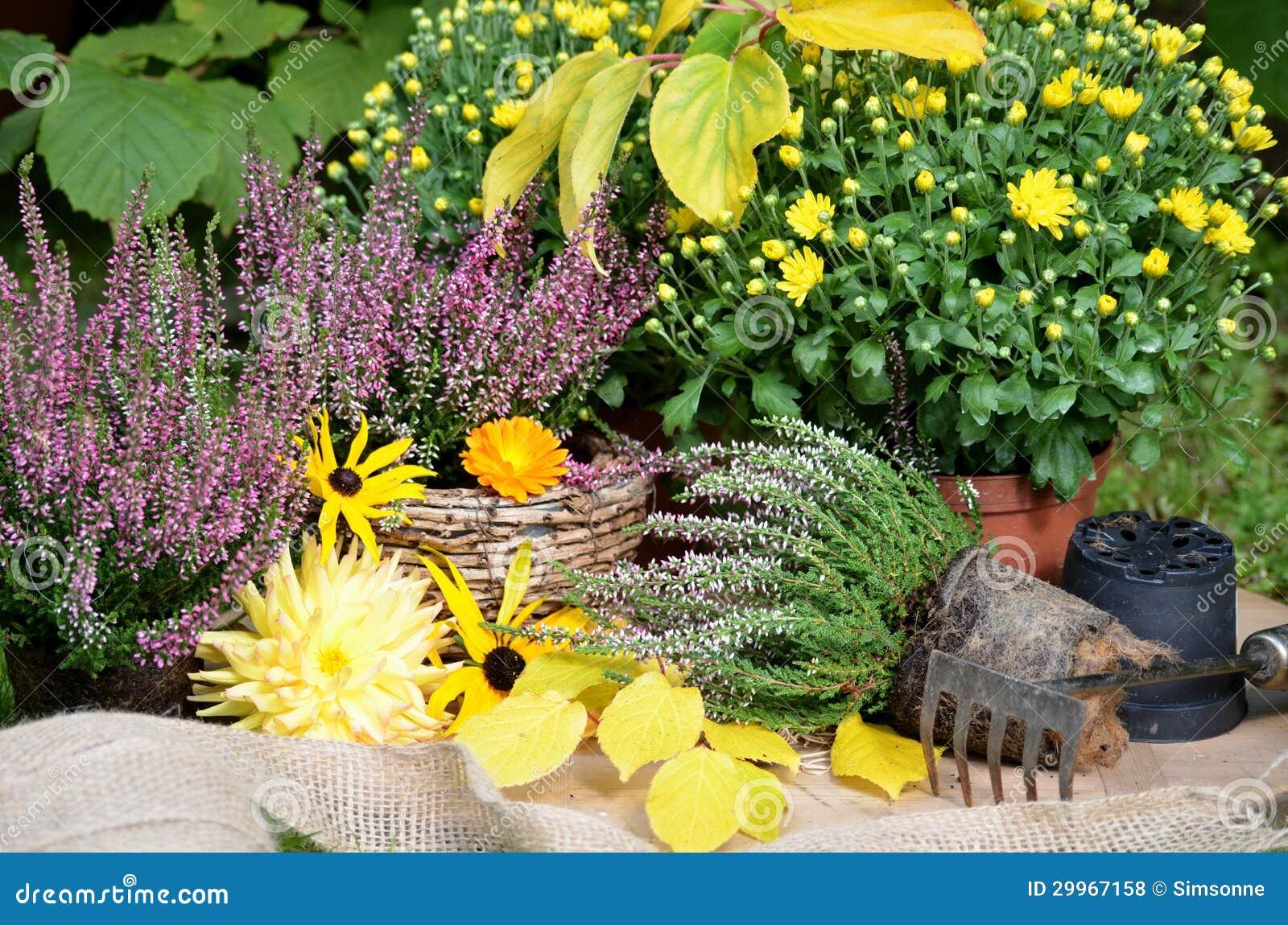Autumn Flowers In The Garden Royalty Free Stock Photos