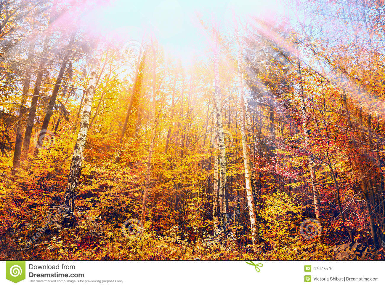 Colorful Autumn forest with blue sky and sun rays