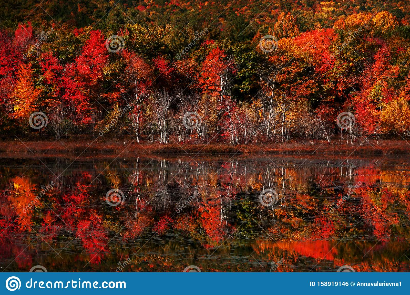 Red Trees by Water