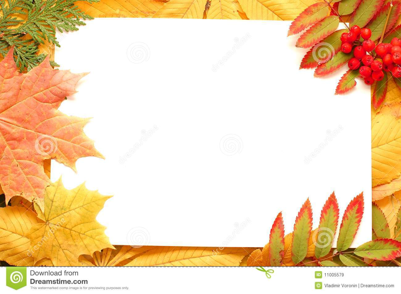 Cone Tree Colorful Autumn Leaves Border Or Frame Stock Image Image