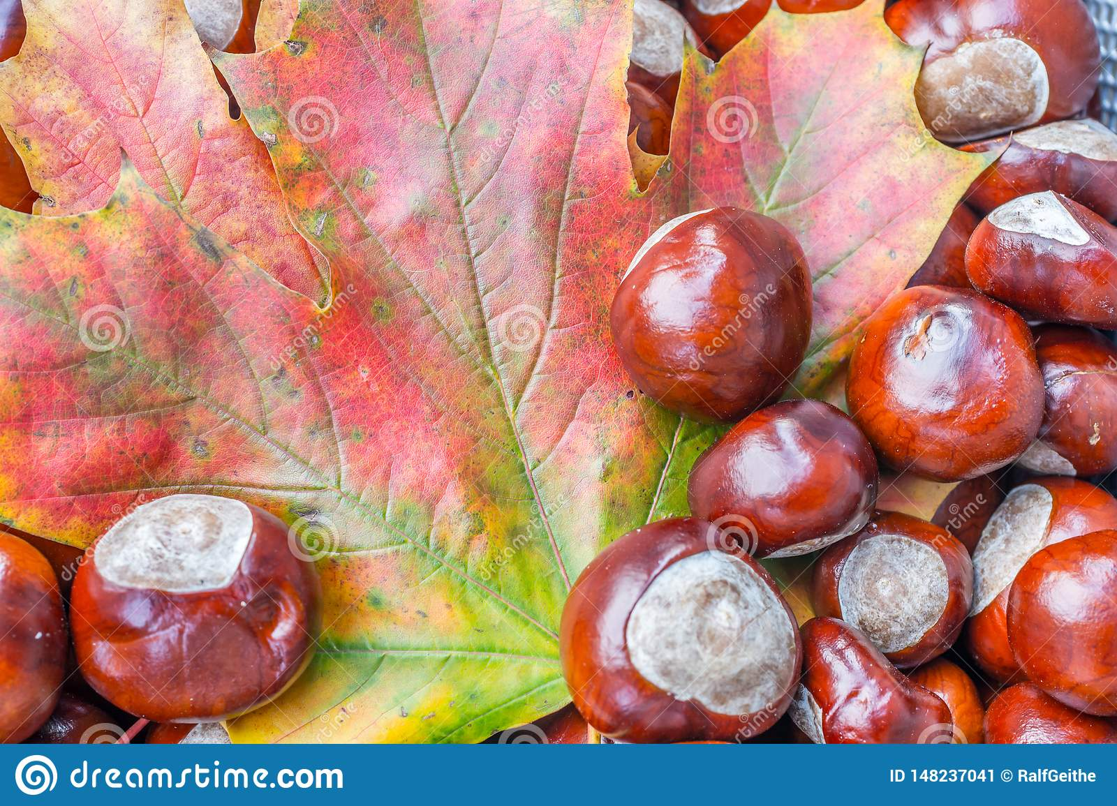 Colorful autumn leaves with chestnuts