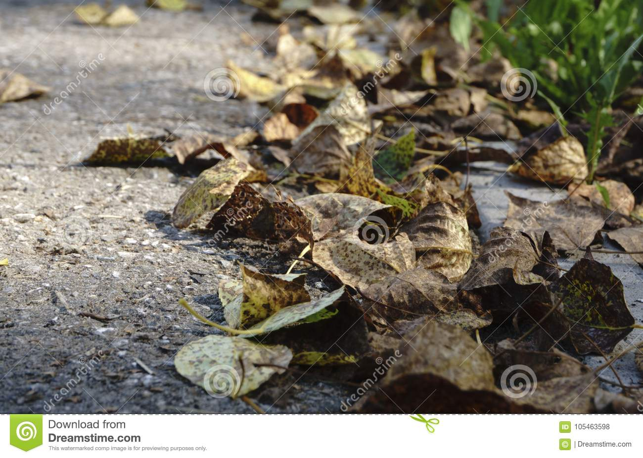 Colorful autumn leaves on cold blue water with sun reflections, gold ripples. Concept of autumn has come