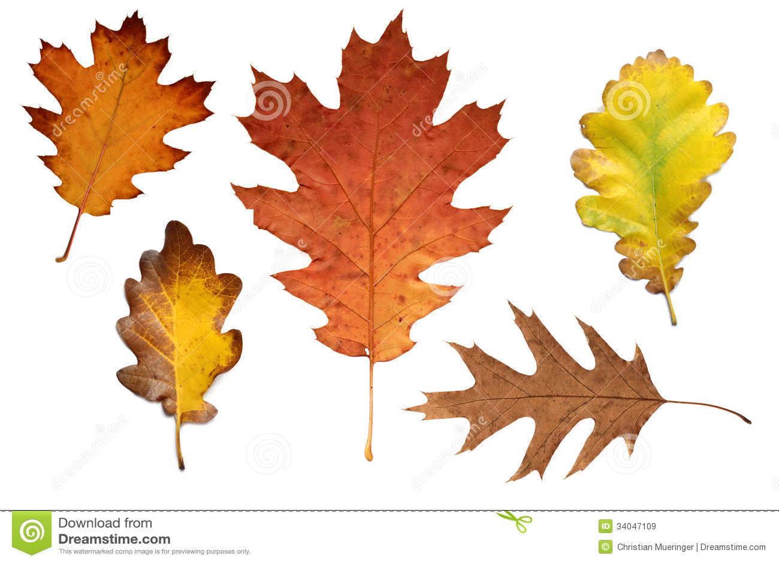 Various - Autumn Leaves