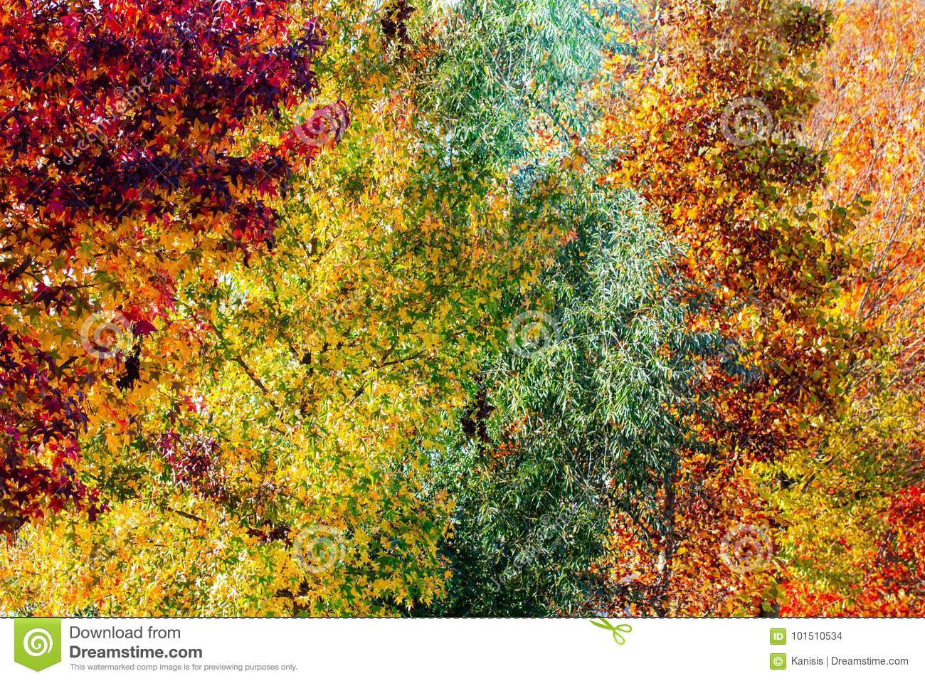 Colorful autumn tree in a different color hue diversity concept