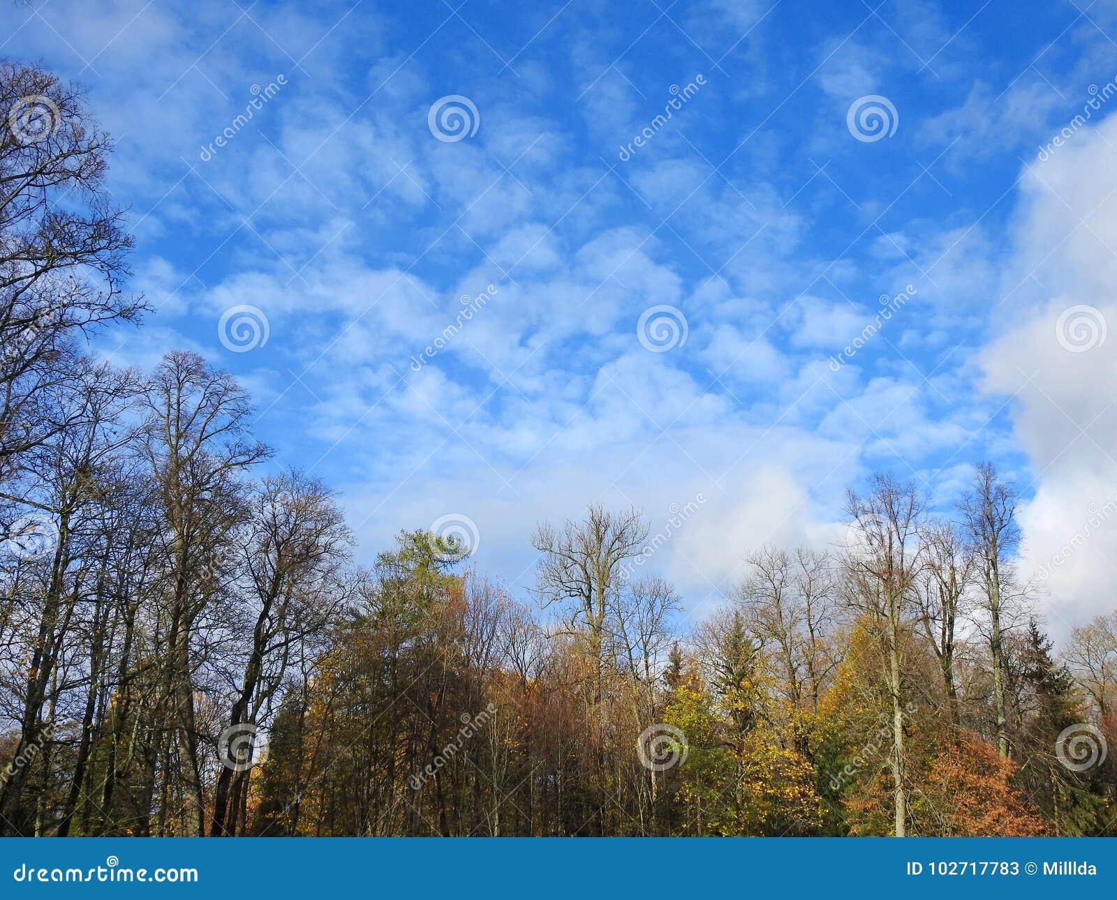 Colorful autumn trees and beautiful sky, Lithuania