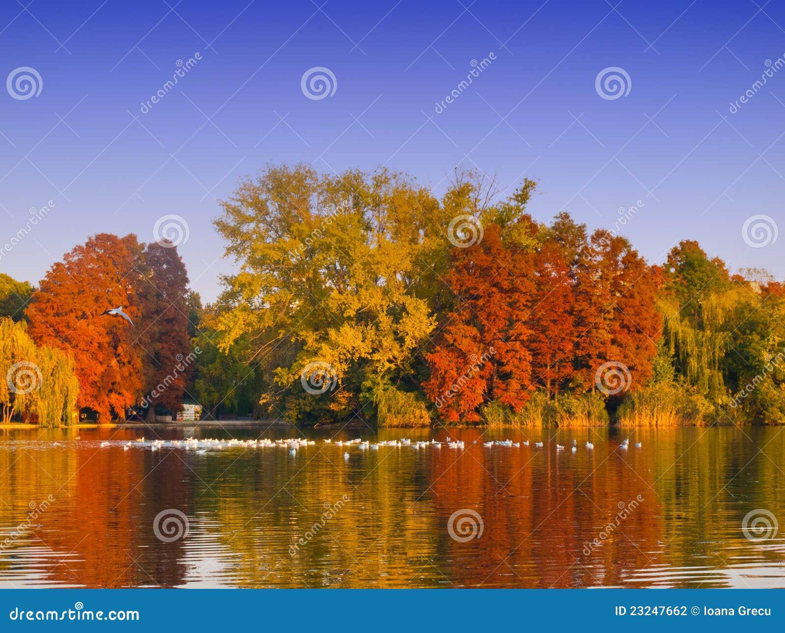 Colorful autumn trees and lake